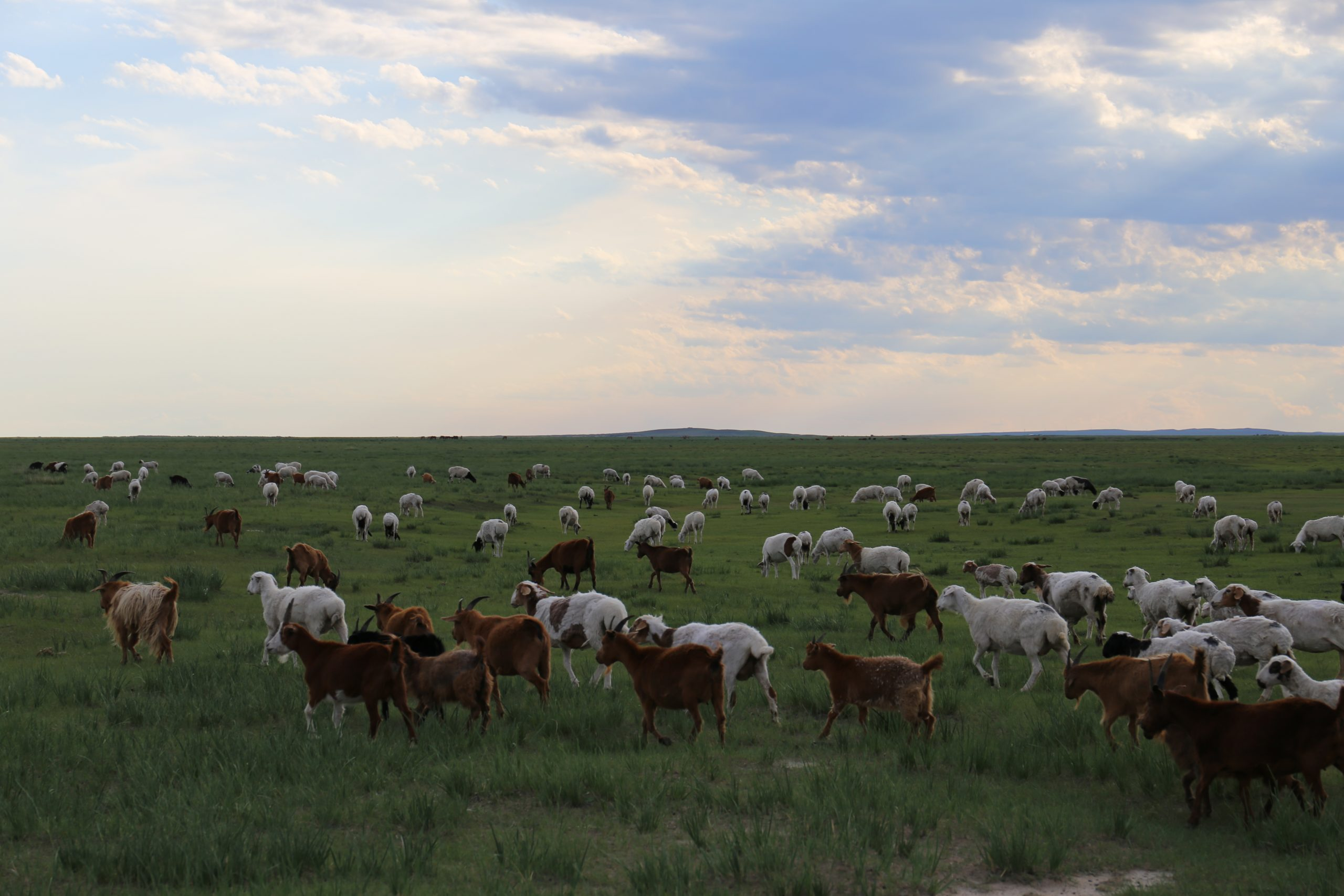 Nomadic lifestyle evolves around their livestock